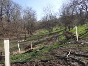 Lower permaculture bed with deer protection
