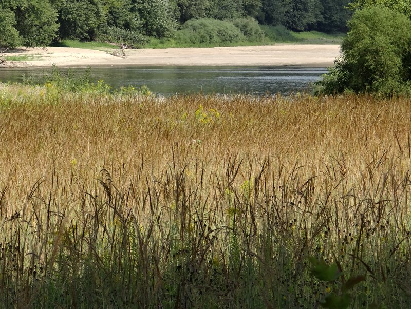 Indiangrass in September