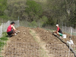 Carrie and Daniel improving the south garden