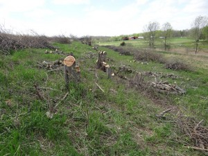 orchard lower line May 2014