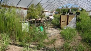 hoop-house-year-2-c-300x169.jpg